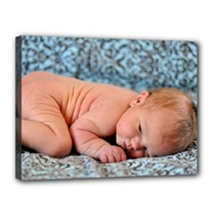 Baby Beckett - Canvas 16  x 12  (Stretched)