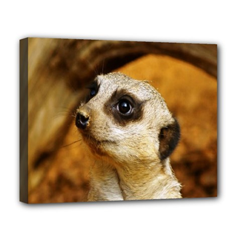Meerkat Deluxe Canvas 20  x 16  (Stretched)