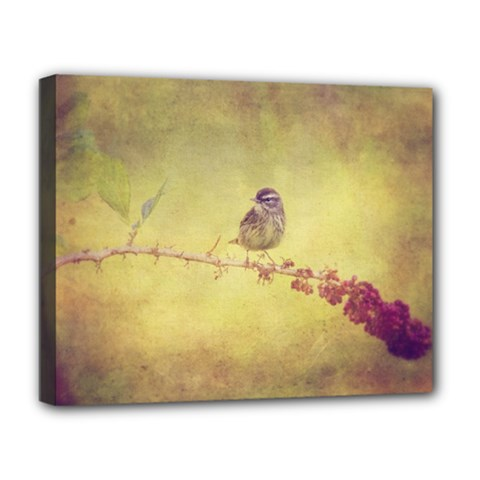 Palm Warbler Deluxe Canvas 20  X 16  (stretched) by heathergreen