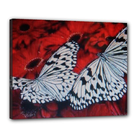 Butterflies Canvas 20  x 16  (Stretched) by ILPADRINO810