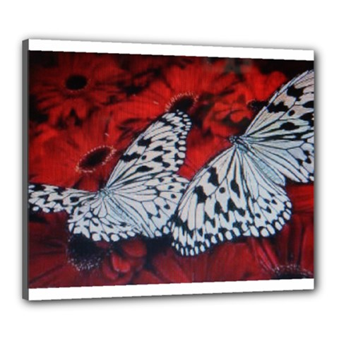 Butterflies Canvas 24  x 20  (Stretched) by ILPADRINO810