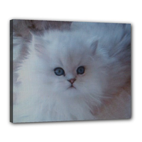 Cat Canvas 20  x 16  (Stretched) by ILPADRINO810