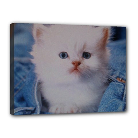 Cat Canvas 16  x 12  (Stretched) by ILPADRINO810