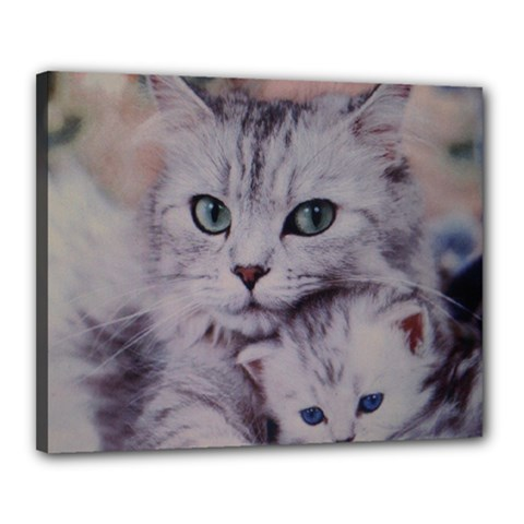 Cats Canvas 20  x 16  (Stretched) by ILPADRINO810
