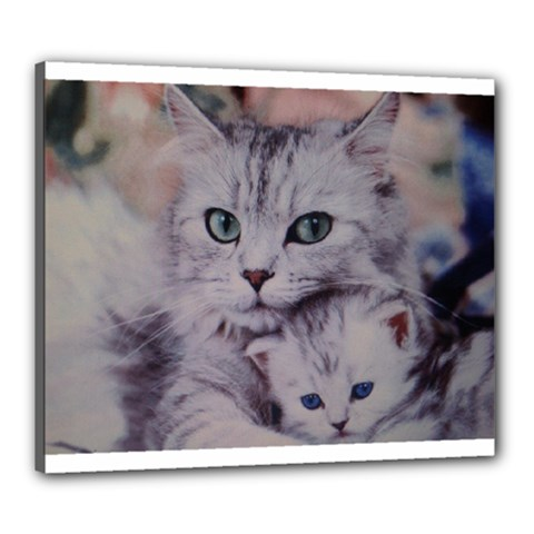 Cats Canvas 24  x 20  (Stretched) by ILPADRINO810