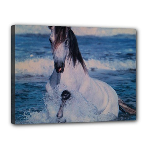 Horse Canvas 16  x 12  (Stretched) by ILPADRINO810