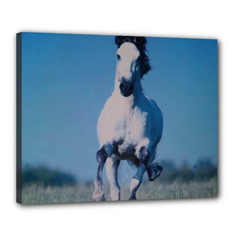 Horse Canvas 20  x 16  (Stretched) by ILPADRINO810