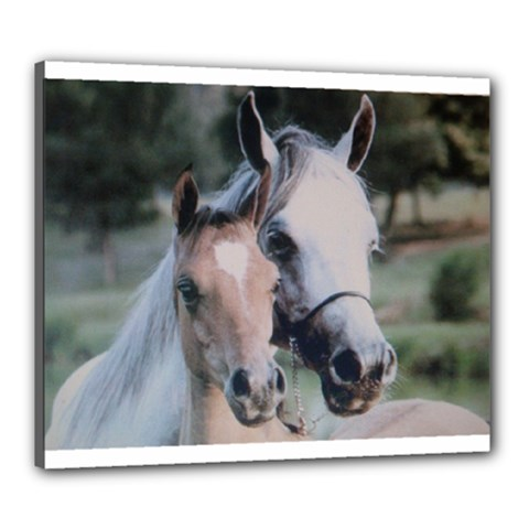 Horses Canvas 24  x 20  (Stretched) by ILPADRINO810