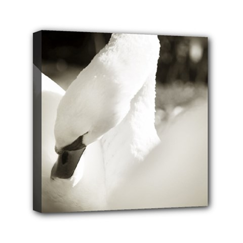 Swan 6  X 6  Framed Canvas Print by artposters