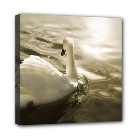 Swan 8  X 8  Framed Canvas Print by artposters