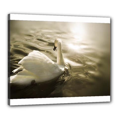 Swan 20  X 24  Framed Canvas Print by artposters