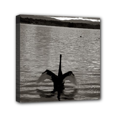 Swan, Canberra 6  X 6  Framed Canvas Print by artposters