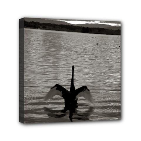 Swan, Canberra 6  X 6  Framed Canvas Print