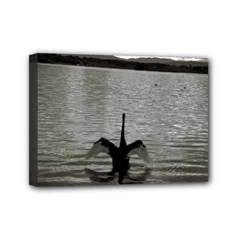 Swan, Canberra 5  X 7  Framed Canvas Print by artposters