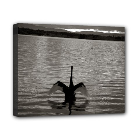 Swan, Canberra 8  X 10  Framed Canvas Print by artposters