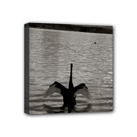 Swan, Canberra 4  X 4  Framed Canvas Print by artposters
