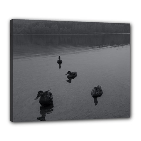 Ducks 16  X 20  Framed Canvas Print by artposters