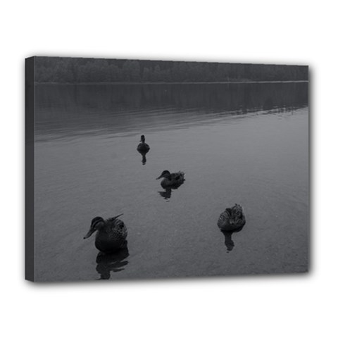 Ducks 12  X 16  Framed Canvas Print