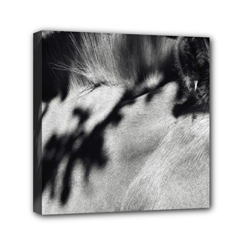Horse 6  X 6  Framed Canvas Print by artposters