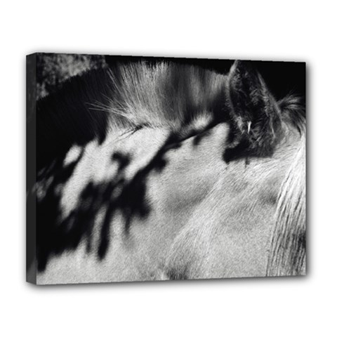 Horse 11  X 14  Framed Canvas Print by artposters