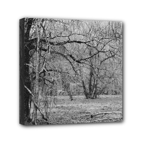 Black And White Forest 6  X 6  Framed Canvas Print by Elanga