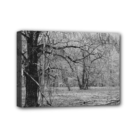 Black And White Forest 5  X 7  Framed Canvas Print by Elanga