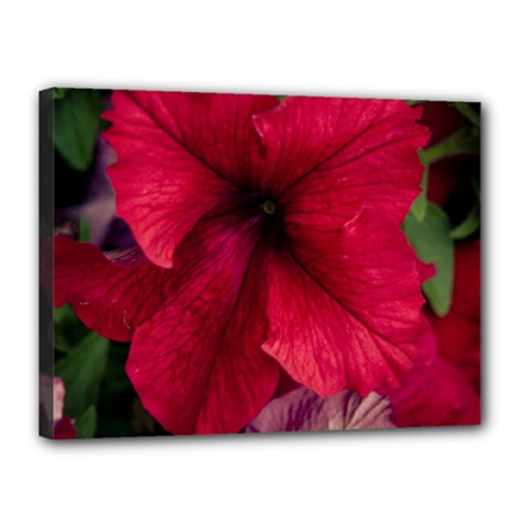 Red Peonies 12  X 16  Framed Canvas Print