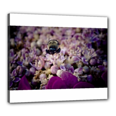 Flying Bumble Bee 20  X 24  Framed Canvas Print by Elanga