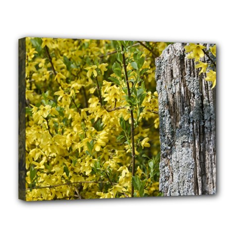 Yellow Bells 11  X 14  Framed Canvas Print by Elanga