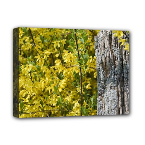 Yellow Bells Deluxe Canvas 16  X 12  (stretched)