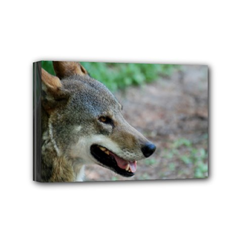 Red Wolf Mini Canvas 6  X 4  (framed) by AnimalLover