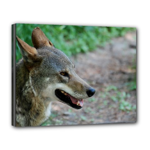Red Wolf Canvas 14  X 11  (framed)