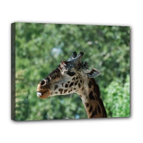 Cute Giraffe Canvas 14  X 11  (framed) by AnimalLover