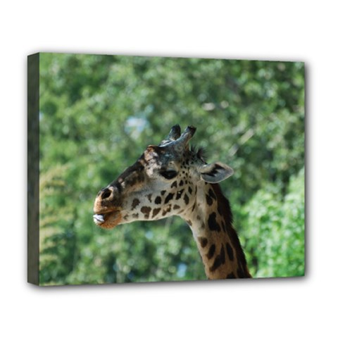 Cute Giraffe Deluxe Canvas 20  X 16  (framed) by AnimalLover