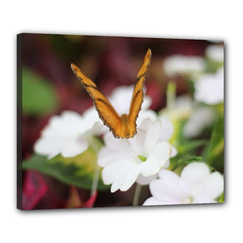 Butterfly 159 Canvas 20  X 16  (framed)