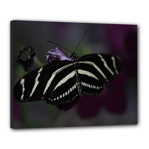 Butterfly 059 001 Canvas 20  x 16  (Framed) by pictureperfectphotography