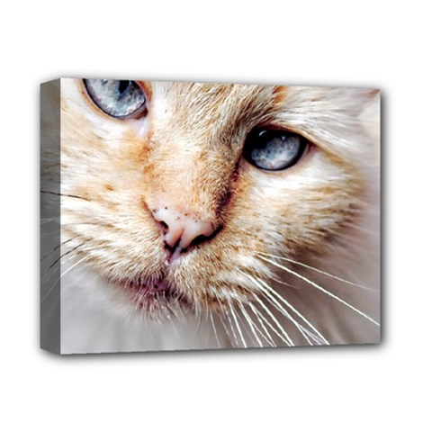 BLUE EYES Deluxe Canvas 14  x 11  (Framed) by dray6389