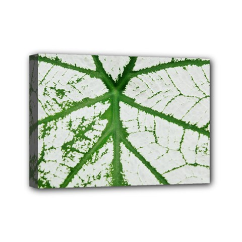 Leaf Patterns Mini Canvas 7  X 5  (framed) by natureinmalaysia