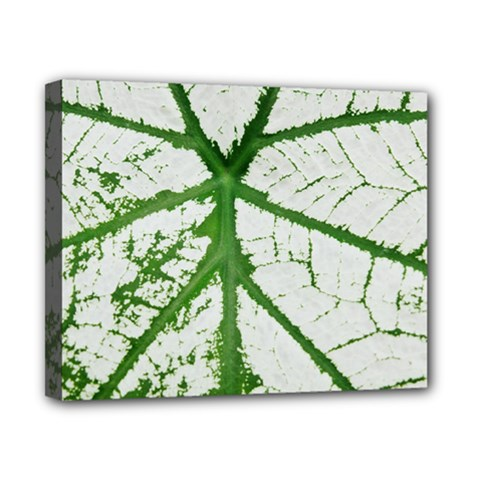 Leaf Patterns Canvas 10  X 8  (framed) by natureinmalaysia