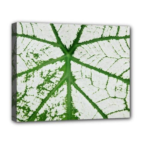 Leaf Patterns Deluxe Canvas 20  X 16  (framed) by natureinmalaysia