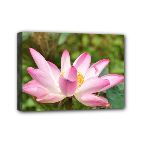 A Pink Lotus Mini Canvas 7  X 5  (framed) by natureinmalaysia