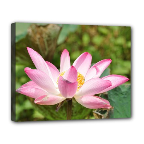 A Pink Lotus Canvas 14  X 11  (framed) by natureinmalaysia