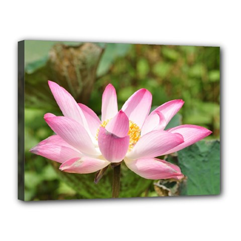 A Pink Lotus Canvas 16  X 12  (framed) by natureinmalaysia