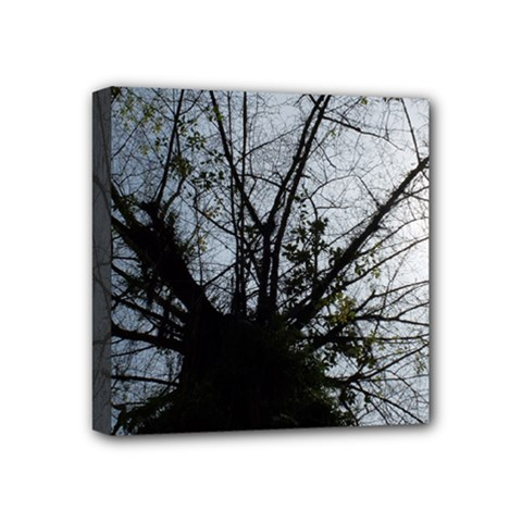 An Old Tree Mini Canvas 4  X 4  (framed) by natureinmalaysia