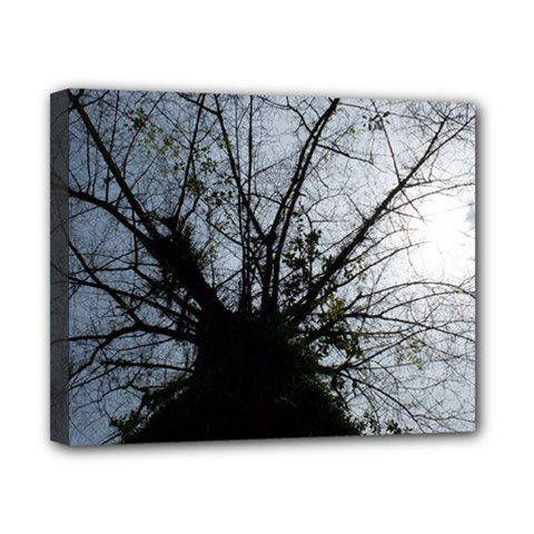 An Old Tree Canvas 10  X 8  (framed)