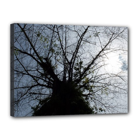An Old Tree Canvas 16  X 12  (framed) by natureinmalaysia