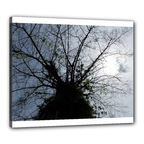 An Old Tree Canvas 24  X 20  (framed) by natureinmalaysia
