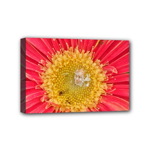 A Red Flower Mini Canvas 6  X 4  (framed) by natureinmalaysia