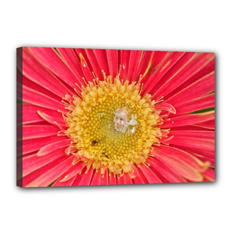 A Red Flower Canvas 18  X 12  (framed) by natureinmalaysia