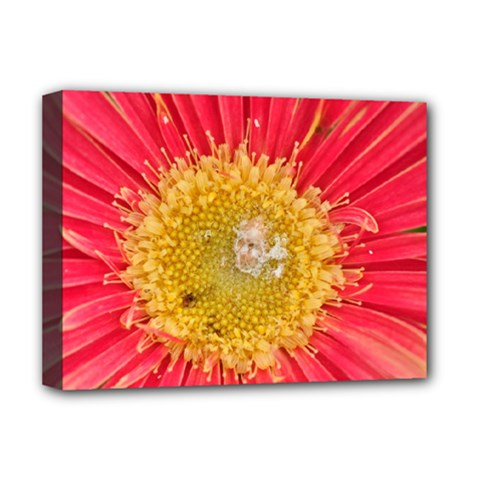 A Red Flower Deluxe Canvas 16  X 12  (framed)